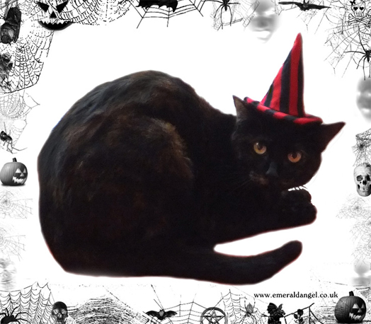 Stripes Pet Witch Hat, Halloween