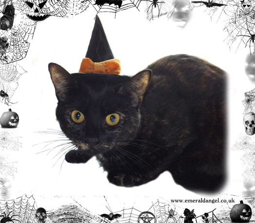 Satin & Bow Pet Witch Hat, Halloween