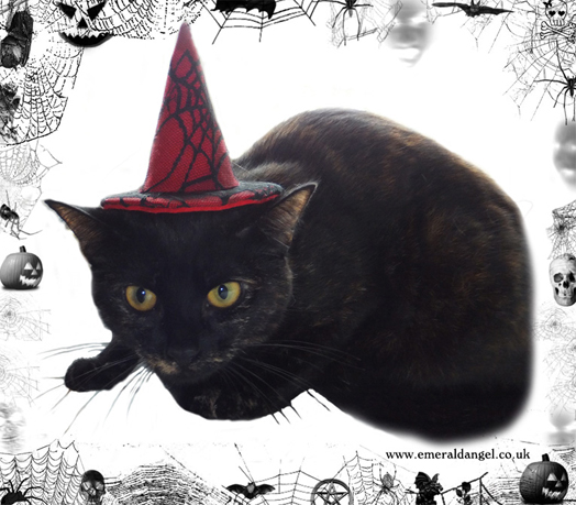 Spider Web Lace Pet Witch Hat, Halloween